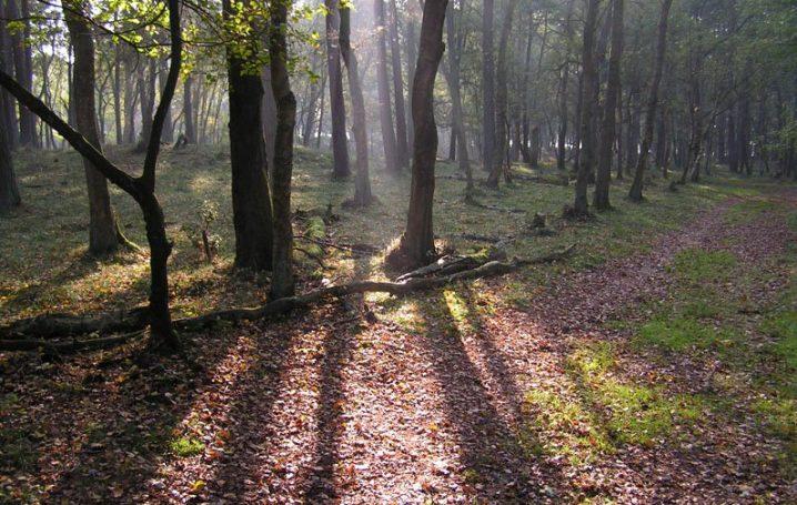 Wandelroute dassenpad hart van Drenthe 4 km